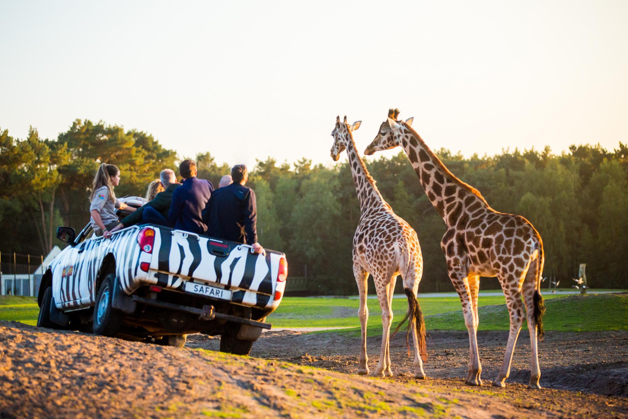 Beekse Bergen Jeepsafari